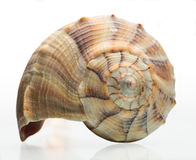 Seashell Fotos de Stock