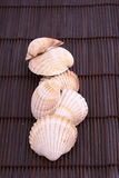 Seashell photographie stock libre de droits