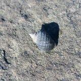 seashell Lizenzfreie Stockfotografie