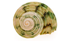 seashell Стоковая Фотография
