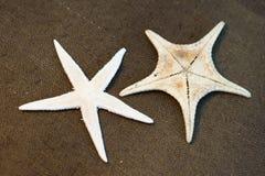 Seashell image stock