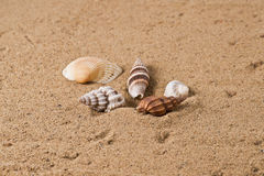 Seashell 6 Lizenzfreie Stockfotos