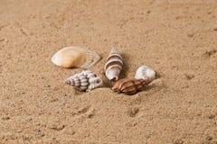 Seashell 6 Royalty Free Stock Photos