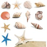 seashell Fotografia Stock