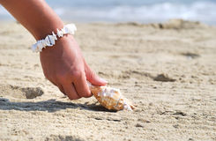Seashell. Woman hand reaching for sheashell at sandy beach Royalty Free Stock Images