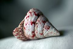 seashell photo stock