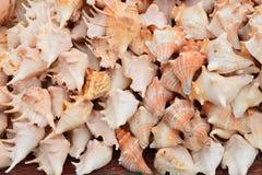 Seashell Стоковое фото RF