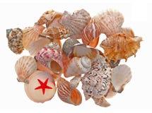Seashell Stockfotografie
