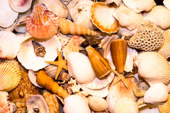 Seashell. Plenty of coloured seashells each other done stock images