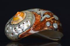 Seashell стоковые изображения rf