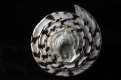 seashell Στοκ Εικόνα