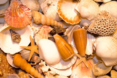 Seashell. Colored seashells each other parlay Royalty Free Stock Photo