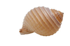 Seashell fotos de archivo