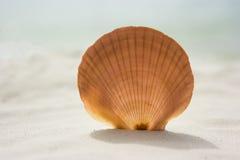 Seashell photos libres de droits