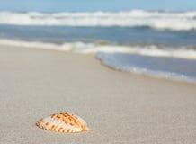 пристаньте seashell к берегу Стоковые Изображения