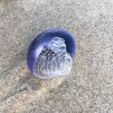 seashell Foto de Stock Royalty Free