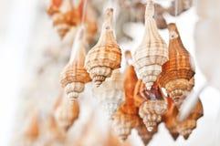 Seashell accossories Stock Photo