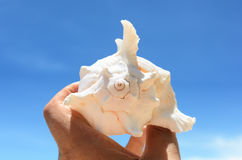 Seashell. Against the blue sky Royalty Free Stock Images
