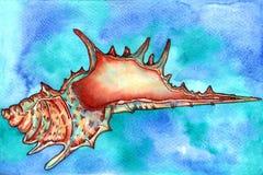 Seashell akwarela Fotografia Stock