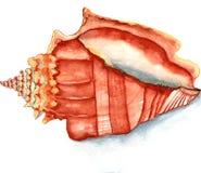 Seashell akwarela Zdjęcie Royalty Free