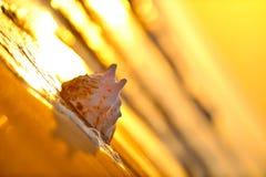 Seashell alla spiaggia immagine stock