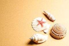 Seashell And Starfish Stock Photo