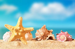 Free Seashell And Starfish On The Sandy Beach Royalty Free Stock Image - 86684326