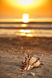 Seashell auf dem Sand lizenzfreie stockfotografie