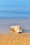 Seashell auf ruhigem Strand stockfoto