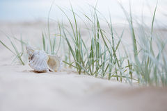Seashell auf Sand Lizenzfreie Stockfotografie