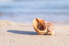 Seashell auf Sand stockfotografie