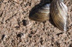 Seashell auf Sand k?stlich Gesunde Nahrung stockbilder