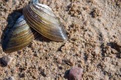 Seashell auf Sand k?stlich Gesunde Nahrung lizenzfreie stockbilder