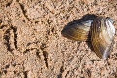Seashell auf Sand k?stlich Gesunde Nahrung lizenzfreie stockfotos