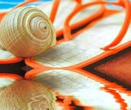 Seashell auf Sandelholzen am Strand Stockbild