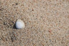 Seashell auf sandigem Strand Lizenzfreies Stockfoto