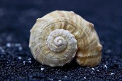Seashell auf schwarzem Sand lizenzfreies stockbild