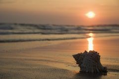 Seashell auf Strand. lizenzfreie stockfotos