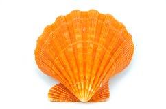 Seashell auf weißem Hintergrund Stockfoto