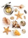 Seashell auf weißem Hintergrund Stockbilder