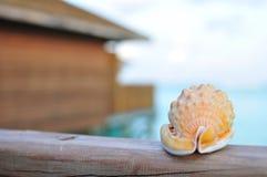 Seashell avec une maison en bois et un océan image stock