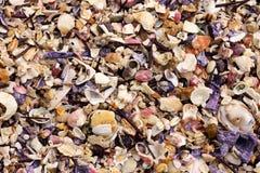 Seashell background. Background of many multi coloured sea shells Royalty Free Stock Photo