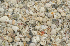 Seashell background. Shot of a seashell background Stock Image