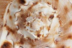 Seashell - the background Royalty Free Stock Photos