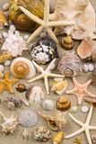 Seashell Background. On California sand Stock Photography