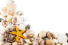 Seashell background.