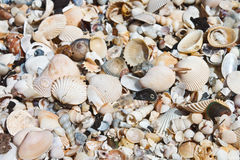 Seashell background Stock Photo
