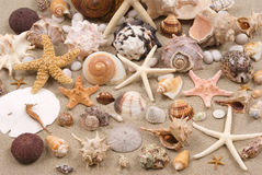 Seashell Background. With various kinds of seashells on sand Stock Photos