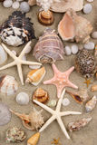 Seashell Background. With different kinds of seashells on sand Royalty Free Stock Photos