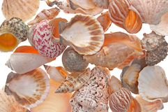 seashell for background Royalty Free Stock Images